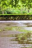 Central Park vert avec des fleurs Photographie stock libre de droits