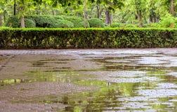 Central Park vert avec des fleurs Images stock