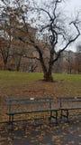 Central Park vinter 2019 arkivfoton
