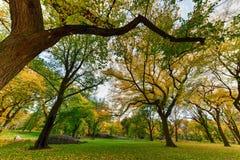 Central Park w jesieni w Miasto Nowy Jork Zdjęcie Stock