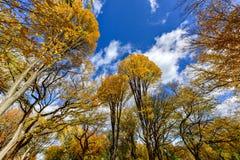 Central Park w jesieni w Miasto Nowy Jork Obrazy Stock