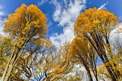 Central Park w jesieni w Miasto Nowy Jork Zdjęcie Royalty Free