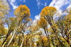 Central Park w jesieni w Miasto Nowy Jork Obraz Royalty Free