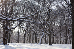 Central Park at winter Stock Photos