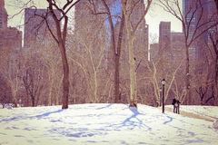 Central Park at winter time special moments on beautiful season Royalty Free Stock Photos