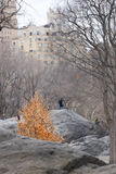 Central Park in wintertime Royalty Free Stock Images