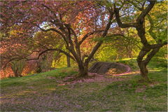 central park wiosna Fotografia Royalty Free