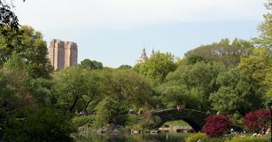 central park wiosna Obraz Royalty Free