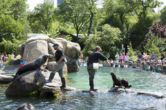 Central Park Zoo New York USA Stock Photography