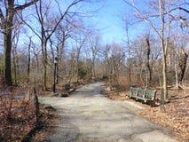 Central Parkbomen royalty-vrije stock afbeeldingen