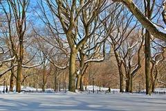 Central Parkbomen Royalty-vrije Stock Afbeelding