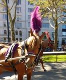 Central Parkhästar, NYC, NY, USA Royaltyfri Bild