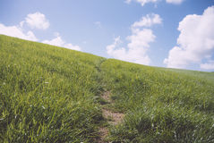 Central path made through angled grass hillside. Central dirt path made through angled grass hillside Royalty Free Stock Photos