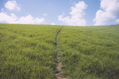 Central path made through grass hillside. Leading to horizon Royalty Free Stock Photos