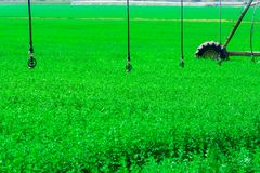 Modern farming. Center pivot sprinkler system watering plants in a green field. royalty free stock image