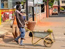Unidentified Ghanaian man pulls a cart with coconuts in local v. CENTRAL REGION, GHANA - Jan 17, 2017: Unidentified Ghanaian man pulls a cart with coconuts in royalty free stock photos