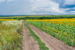 Central Ukrainian rural landscape Royalty Free Stock Image