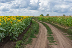 Central Ukrainian rural landscape. At summer season Stock Images