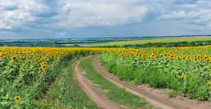 Central Ukrainian rural panoramic landscape Stock Image