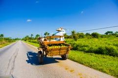 CENTRAL VÄG, KUBA - SEPTEMBER 06, 2015: Häst och Arkivfoton