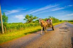 CENTRAL VÄG, KUBA - SEPTEMBER 06, 2015: Häst och en vagn Arkivbild