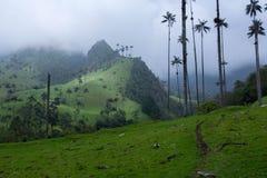 centrala majestätiska berg för den cocorakaffecolombia cordillera berömda växande ligganden som nationalen gömma i handflatan, va Arkivfoton
