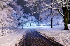 Centrala park w Ryskim, Latvia przy zimy nocą fotografia stock
