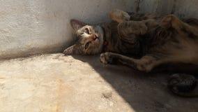 Centrale allegra del Pussycat Fotografie Stock Libere da Diritti