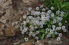 Centrale avec les fleurs blanches photos stock