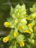 Centrale avec les fleurs jaunes Images stock
