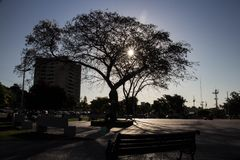 centrale boom van een belangrijk vierkant in de stad van de zon 'Quilpue ' royalty-vrije stock foto