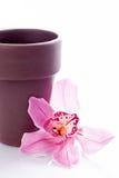 Centrale d'orchidée avec le bac de fleur brun Images libres de droits