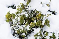 Centrale dans la neige Photos libres de droits