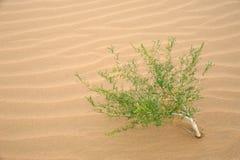 Centrale dans le désert images libres de droits