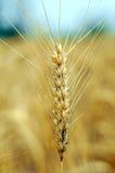 Centrale de blé images libres de droits