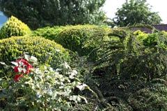 Centrale de buissons image stock