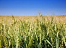 Centrale de céréale de blé Photographie stock libre de droits
