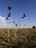 Centrale de désert photographie stock libre de droits