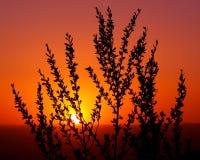 Centrale de désert au coucher du soleil Image libre de droits