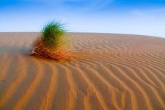 Centrale de désert Photos libres de droits