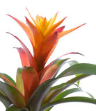Centrale de fleur Image stock