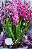 Centrale de fleur de Pâques Photos stock