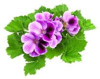 Centrale de floraison de maison avec de belles couleurs Photo stock