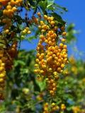 Centrale de graine jaune images libres de droits