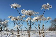 Centrale de l'hiver Images libres de droits