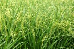 Centrale de riz photos libres de droits