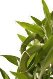 Centrale en bambou Images stock