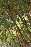 centrale en bambou Images libres de droits
