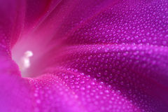 Centrale, fleur Image libre de droits