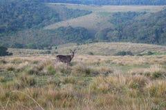 Centrale heriage van de hooglandwereld zit van Sri Lanka Stock Foto's